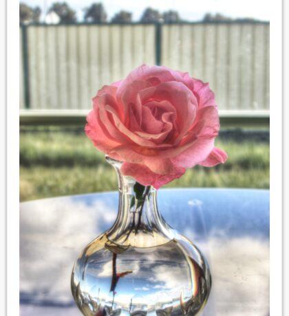 Pink rose (HDR) Sticker