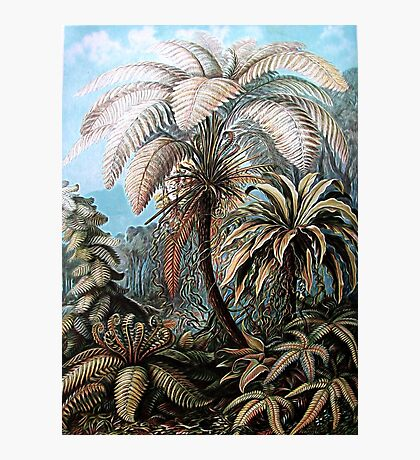 Plants & Animals, palm, tree, beach, ferns, psychedelic, art, illustration, haeckel,  Photographic Print