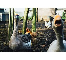 Mad Goose Photographic Print