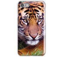 Adolescent Tiger iPhone Case/Skin