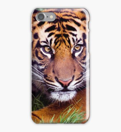 Adolescent Tiger iPhone Case/Skin