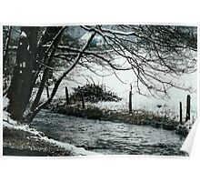 Tree Over Winter River Poster