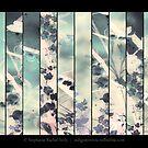 Summertime Sadness by Stephanie Rachel Seely