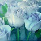 Soft Blue Roses by Stephanie Rachel Seely