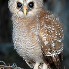 Young Owl by Jennifer Sumpton
