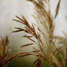 wild grasses 8 by vigor