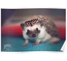 Linus the Bed Hedgehog Poster