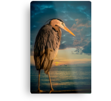 Great Blue Heron and Blue sunset Metal Print