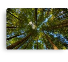 A Canopy of Trees Canvas Print