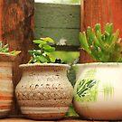 Three Pots by Carol James
