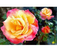 Rose color trio Photographic Print