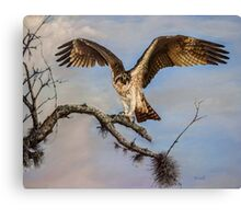 Osprey on the branch Canvas Print