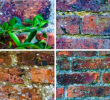 Photo collage of stone wall backgrounds with ivy leaves Sticker