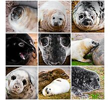 Photo collage of baby seals images Photographic Print