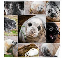 Photo collage of baby seals images Poster