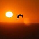 Sun Flight by David Denny