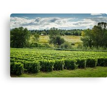 Afternoon in a Vineyard Canvas Print