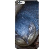 Fairy Penguin at St Kilda iPhone Case/Skin