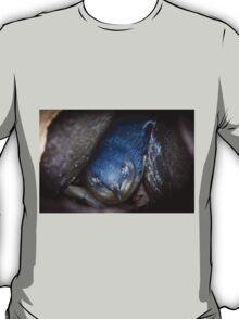 Fairy Penguin at St Kilda T-Shirt