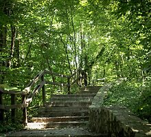 Steps Leading Out of James River Park by WeeZie