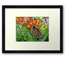 All Things Bright & Beautiful Framed Print