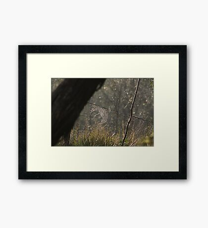 Spider's Web Framed Print