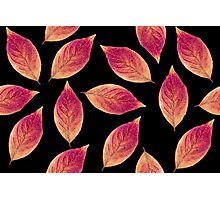 Leaves of Fire Photographic Print
