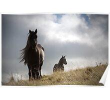 Sunlit fell ponies Poster
