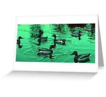 Duck Serenity  Greeting Card