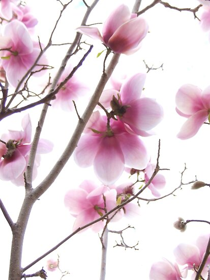 Essence of Spring by Harvey Schiller