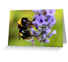 Bumble Bee & Lavender Greeting Card