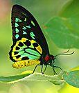 Beautiful Butterfly by Karen Tregoning