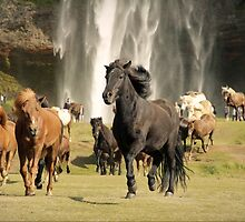horses and the waterfall by matkowski