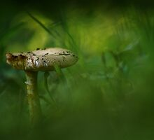 Mushroom in the grass by tom klausz