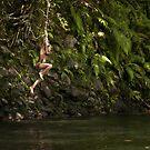 Swingin' - Pohnpei, Micronesia by Alex Zuccarelli