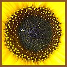 SUNFLOWER CLOSEUP by ©The Creative  Minds