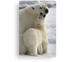 Polar Love Canvas Print