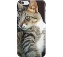 Tabby Cat Isolated Background iPhone Case/Skin