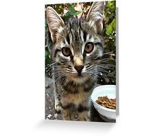 Tabby Cat Kitten Making Eye Contact Greeting Card