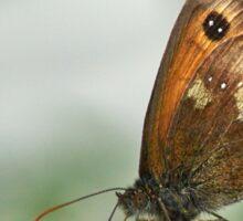 Butterfly on mint Sticker