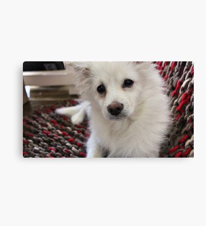 Furry Friend on the Blanket  Canvas Print