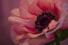 Pink Anemone  by Nicole  Markmann Nelson