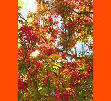 Vibrant Spring by Darryl Kravitz Unisex T-Shirt