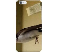 Tree swallow iPhone Case/Skin