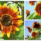 Sunflowers by ©The Creative  Minds