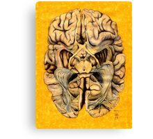 Brain section showing visual system pathway Canvas Print