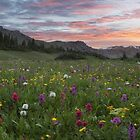 Colorado Wildflowers Panorama - Butler Gulch Colors 1 by RobGreebonPhoto