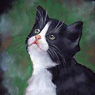 Tuxedo Cat Looking Up: Kitten: Oil Pastel Painting by Joyce Geleynse