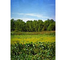 Sheldon Marsh - Summer Meadow Photographic Print