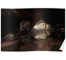 Spectacled Caiman (juvenile) Poster